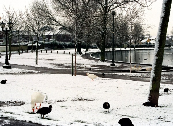 The Lough in Snow, Cork City
